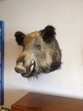 very large boars head £300