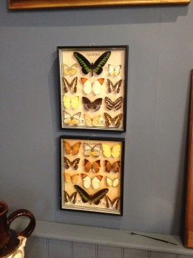 Two well mounted and cased displays of Malaysian Moths and Butterfly's - £120 the pair or £65 each case
